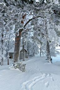 A Snowy Winter Path