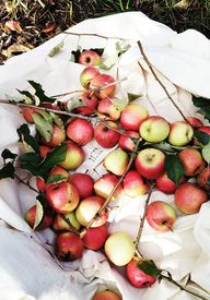 bustles of apples