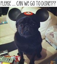 can we go to disney?