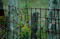 Rustic Fence by Bama