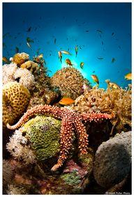 Under the sea! Sea s