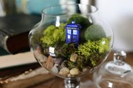 Doctor Who Terrarium