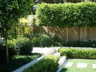 JPleached trees abov