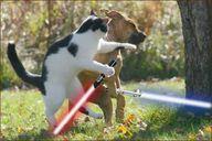 Sith Cat, Jedi Dog