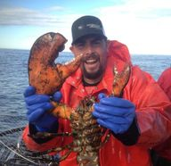 Maine Lobster caught
