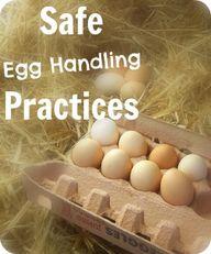 Safe Egg Handling Pr