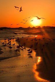 Seagull sunset beach