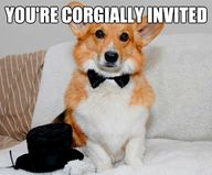 Corgially invited.