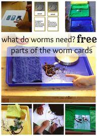 Montessori Science:...