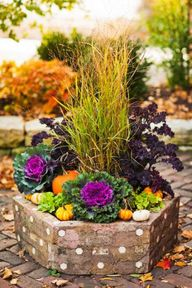 Use ornamental kale