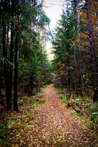 fall forest, \