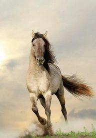 Free Spirit, horse,