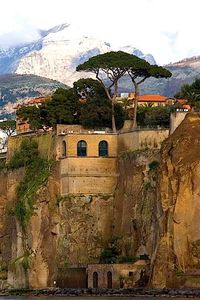 Sorrento, Italy. They call these trees Umbrella Pines - the Italian countryside is full of these interesting trees.