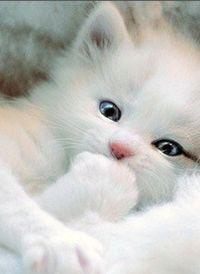 Beautifull kitten