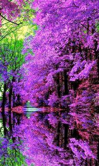Infinite Passion: Beautiful Nature