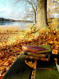 Perfect autumn day sky books outdoors trees autumn leaves bench