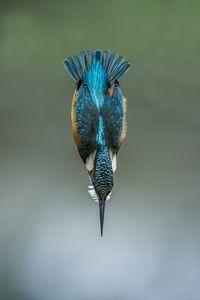 kingfisher dip