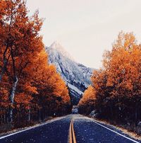 a winding autumn road