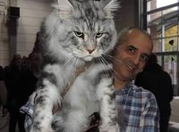 Big, Fluffy and Definitely Adorable Maine Coon Cat - 10 Pictures - Animal's Look