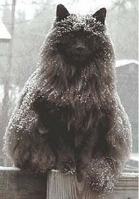 Epic winter cat