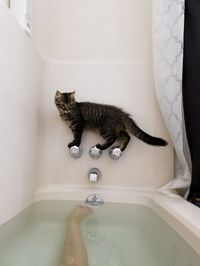 Our cat would so do this... then jump right on in! She worries me