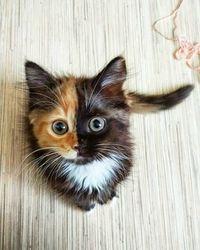 What a precious mixed kitty