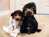 Princess Leia & Darth Vader . . . for dogs.