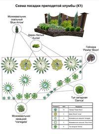 Ландшафтный дизайн хосты схема посадки