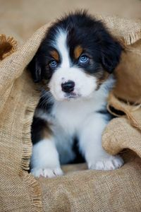 Top 10 Healthiest Dog Breeds ~ The Pet's Smarty