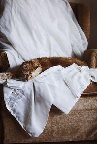 Cats; by RengimMutevellioglu