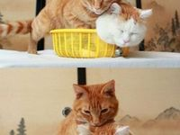 For the love of cats.