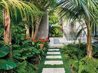 Tropical Garden Ideas for My House in Dodowa, Ghana