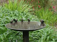 Garden Bird Bath's