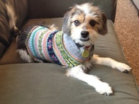 Dog Sweaters & More