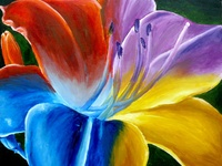 Kaleidoscope of Vivid Colors