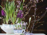 The Splendour of Spring