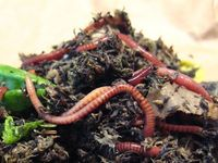 Garden ~ Vermiculture & Composting