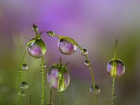Rain & Drop Water