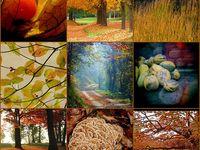 My Favorite Season..Fall