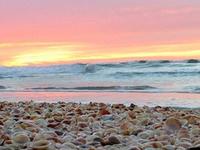 Sea  Shells