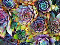 Succulents & Cactus - ETC.