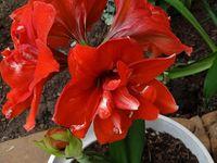 Rocío plantas flor