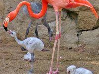 Flamingo Madness