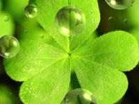 Irish Heritage.  I'm an Irish Lass :)
