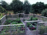 Garden - Veggies