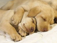 Furry Friends - Doggies