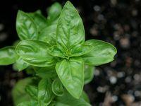 Food production, plants, growing methods, pest control, productive gardening ideas