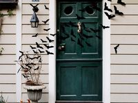 Halloween / Fall / Thanksgiving