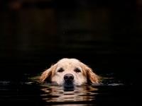 Dogs : Man's Best Friends