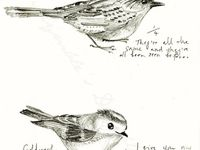 Illustrations, sketches, and artwork featuring birds as the main subject matter